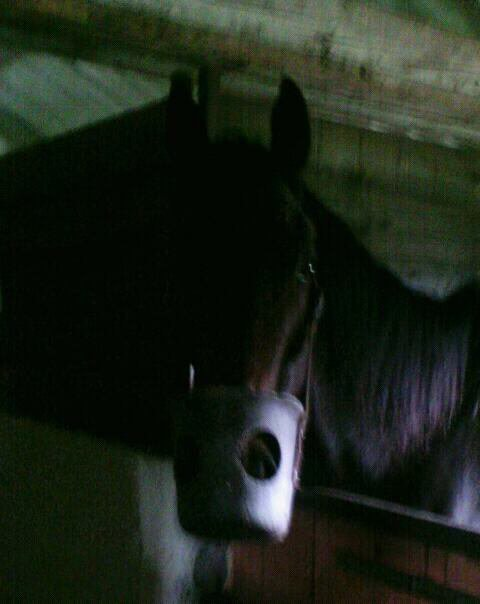 Mon cheval lisatori