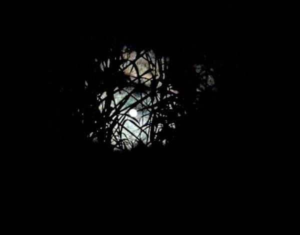 L'oeil de la nuit...(26 décembre 2015)