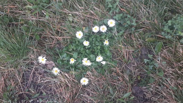 Fleurs sauvages...