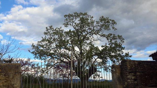 Mon arbre,mon ciel, pour vous souhaiter une belle et douce nuit,vais pas tarder à couper...