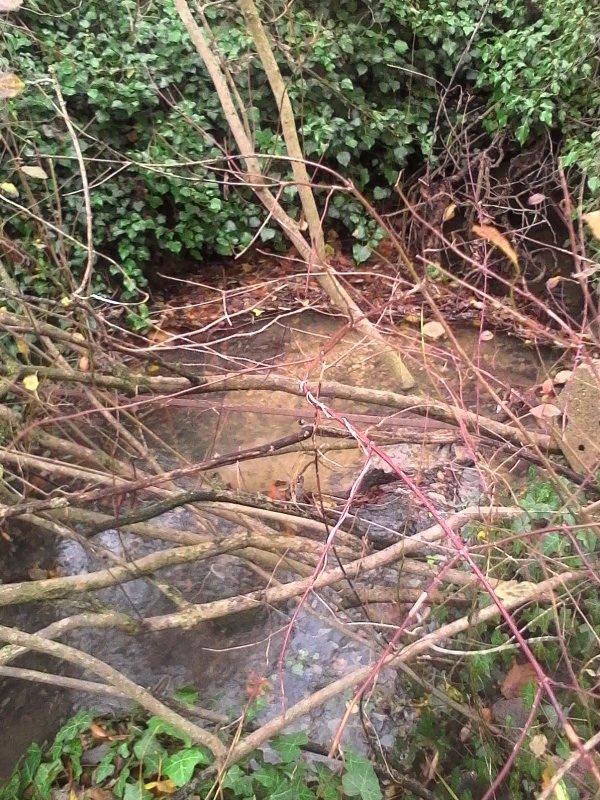 Retour de l'eau dans le ruisseau... Merci aux fortes pluies.