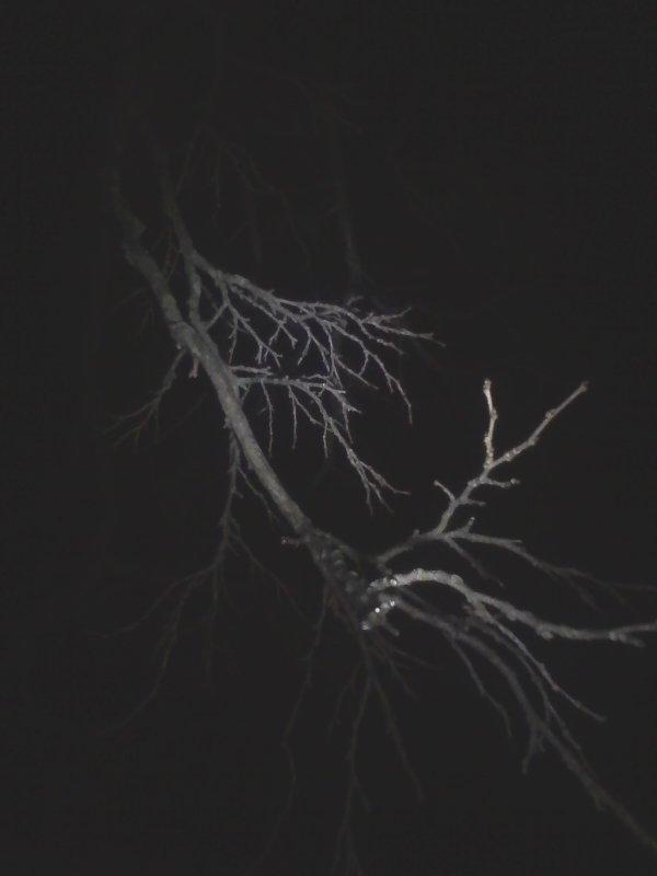 Mon arbre sous les nuages sous la lune... Dans la nuit noire et sombre...