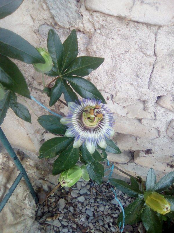 Pollinisation réussi ??