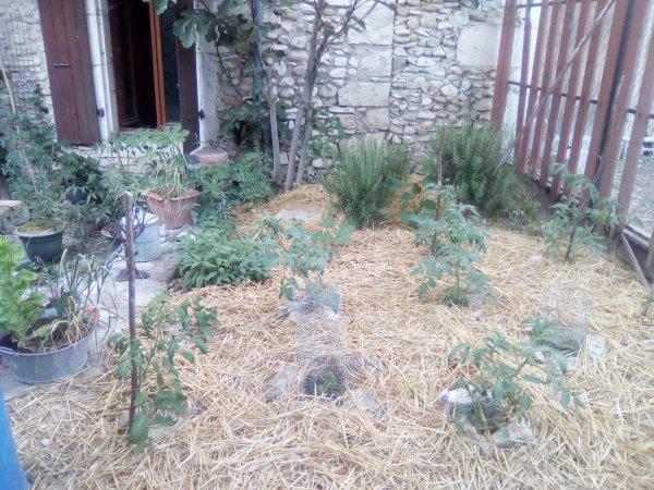 Le petit jardinou de la Sorcière...