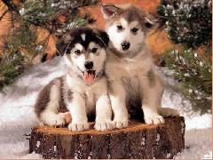 voici quelques photos d'autres chiens
