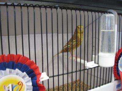 phaeo jaune champion du monde Tours 2011 BINDSCHAEDEL Ulrike 94pts
