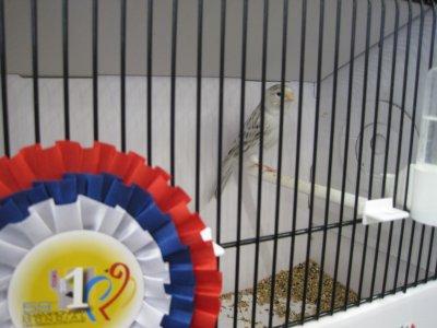 agate topaze blanc stam champion du monde Tours 2011 BONAMINI Alessandro 92 pts