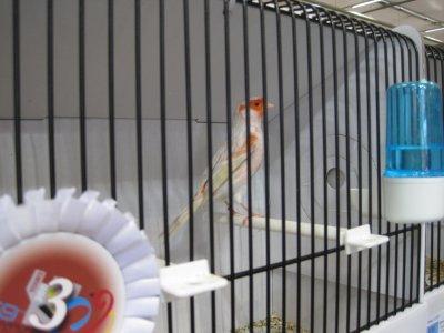 satiné rouge mosaique stam 3eme champion du monde Tours 2011 FACQ Bernard 91 pts
