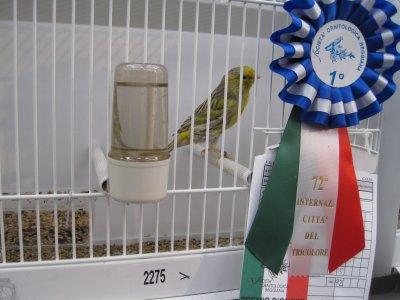 Reggio 2011 - noir eumo - 1er ind. - 92pts - cage 2275