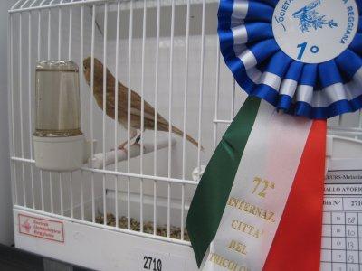 Reggio 2011 - brun pastel blanc ivoire mosaique - 1er ind. - 92pts - cage 2710