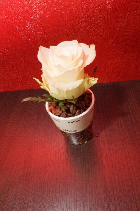 Rose au café