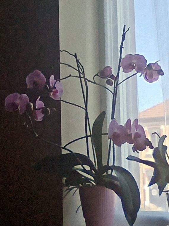 L'orchidée ❤️❤️.