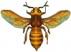 Piqûres d'abeilles