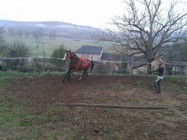 """""""L'equitation, l'art de viser la perfection tout en sachant que jamais on ne l'atteindra"""""""
