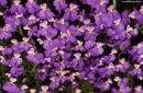 Photo de violette71