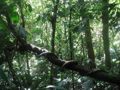 """""""Un sommet de la forêt tropicale"""" et en préparation"""