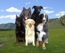 Photo de chien--10