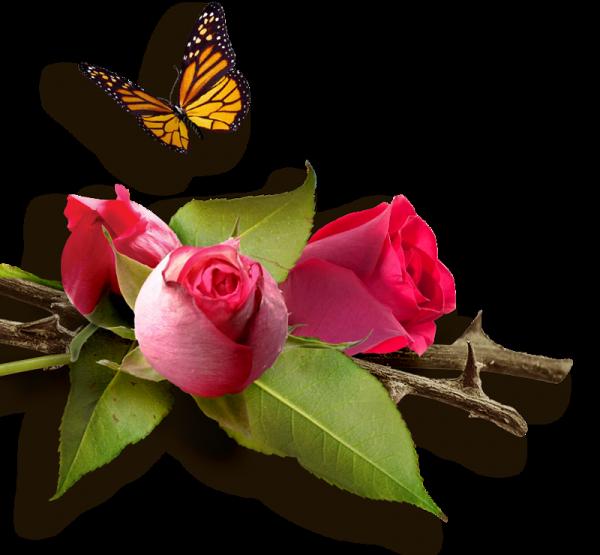 voici quelques fleurs pour vous souhaiter un bon dimanche