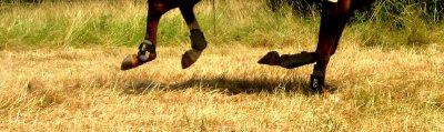 Faire un bon galop dans les champs, la liberté <3