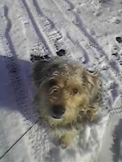 monpetit chien loulou je t aime tu est un bon chien