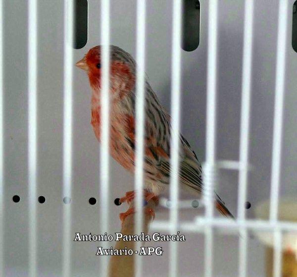 AGATA TOPACIO ROJO MOSAICO 2010