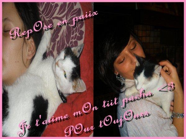 MOn tiit bébé chat d'amOur tu me manque t'es partiie trOp TOT !!!