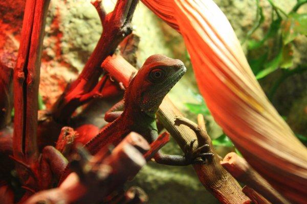 Ma deuxième passion les reptiles !