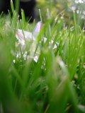 Photo de E-Lifex