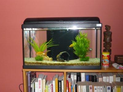 Aquarium mes petits oiseaux exotiques for Nourriture poisson rouge voile de chine