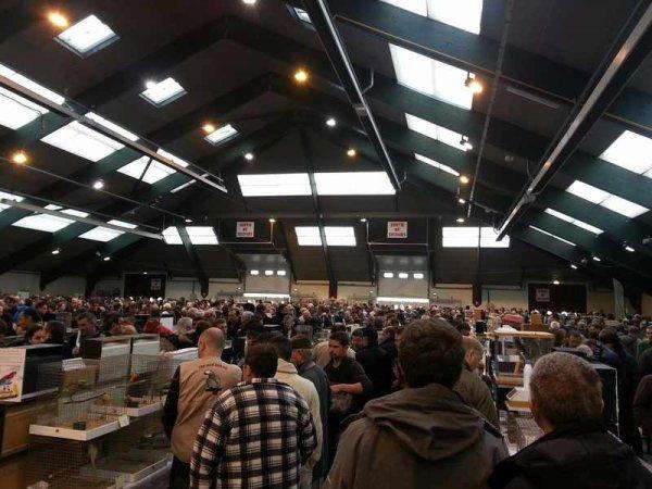 Photos de la Foire aux Oiseaux de Pontivy 2014 (reportage photo)