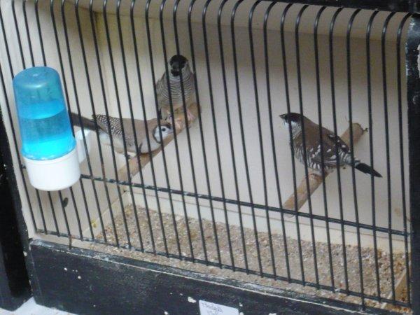 Foire aux oiseaux de Pontivy 2014 ! (suite)