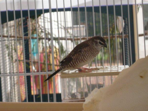 Les oiseaux s'impatientent