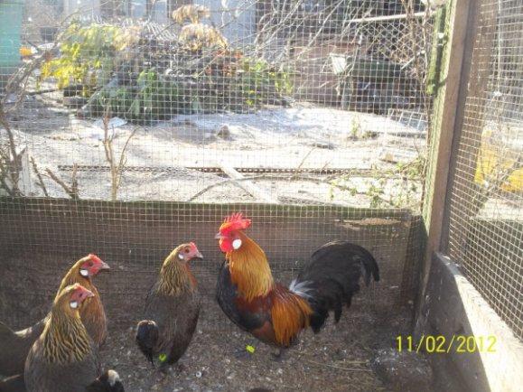 L'oeuf ou la poule.....résolu à 12 ans...c'était trop facile !!!