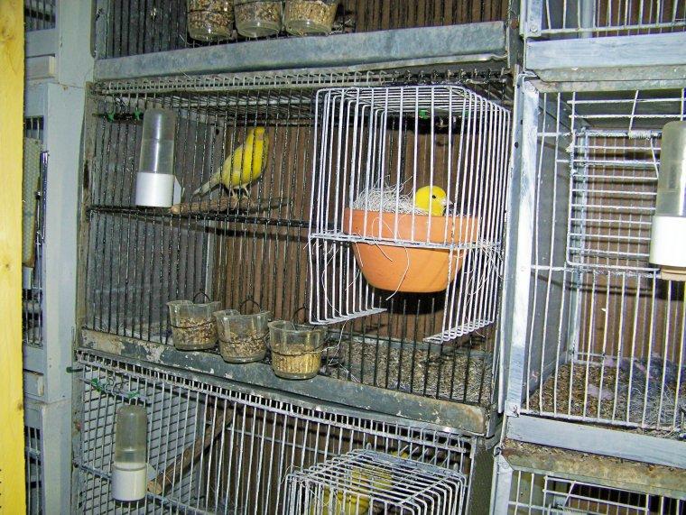 Les volières et les cages