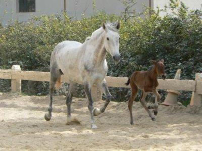 Quelques photos de Malika(mère) et Toscane(fille) quand elle été bébé et enfin adulte !!!puis Te Quiero et Toscane