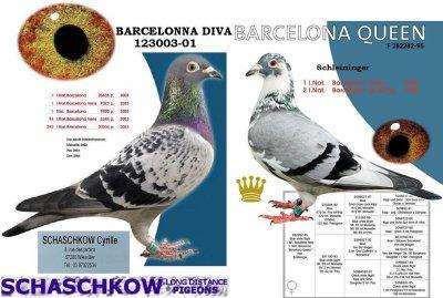 Une de mes origines des  pigeon de Schaschkow