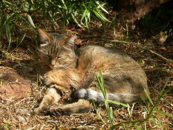 Chat dans l'Égypte antique