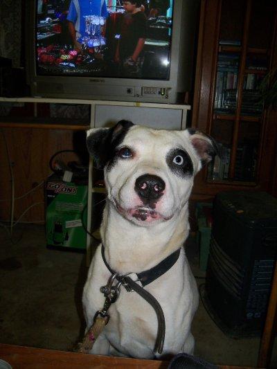 mon bebe chien!!!!