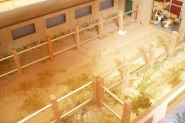 hangar pour les vaches (l'hiver)
