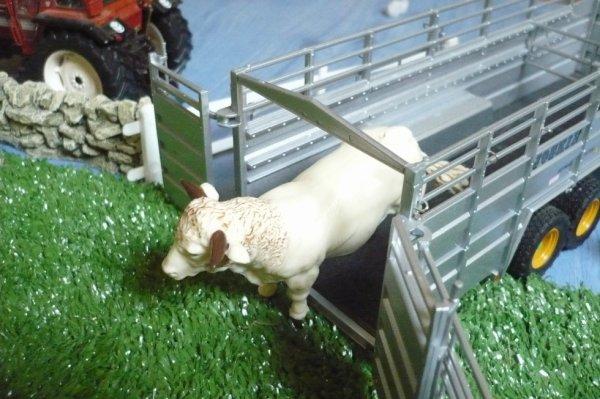 la vache qui sore de la bétalliére