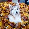 Jour d'automne.