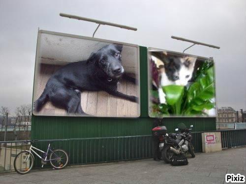 voici  mes deux trésor match mon chien  et kinder