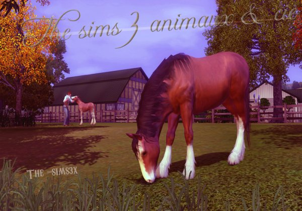 Sims 3 animaux & cie.