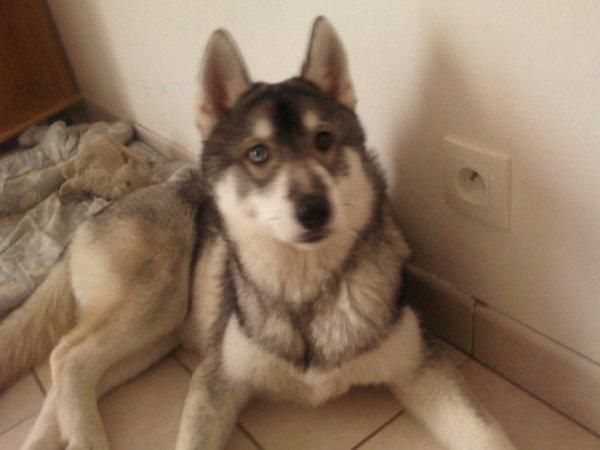 Mon autre chien
