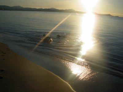 Ballade à la plage !!