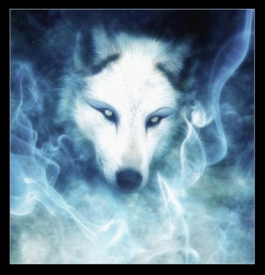Sur ton coeur y a un loup car c'est ce que tu est mais oublie jamais de veiller sur tes louveteaux ♥