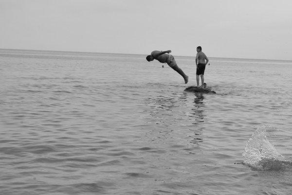 les dauphins de dellys