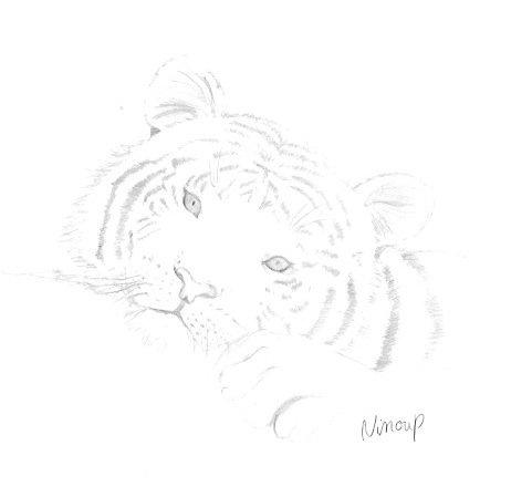 tigre dessiner à partir d'un modèle