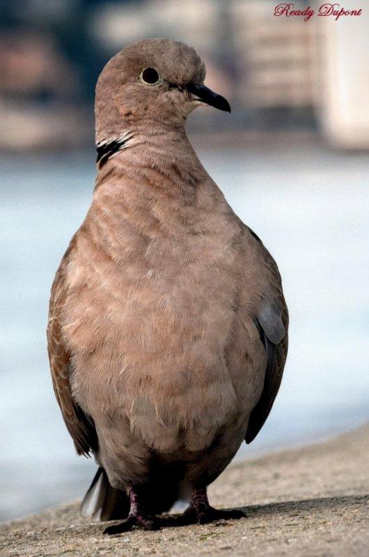 N'oiseau!!!