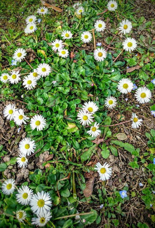 Ch'tites fleurs